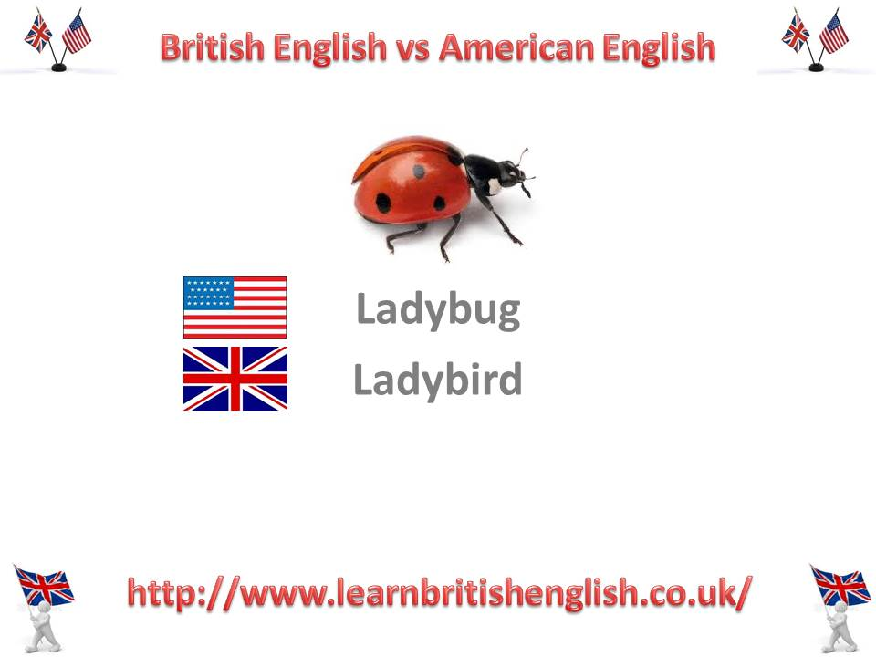 learn english  ladybird or ladybug  u00bb learn british english